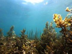 algues bienfaits complements alimentaires