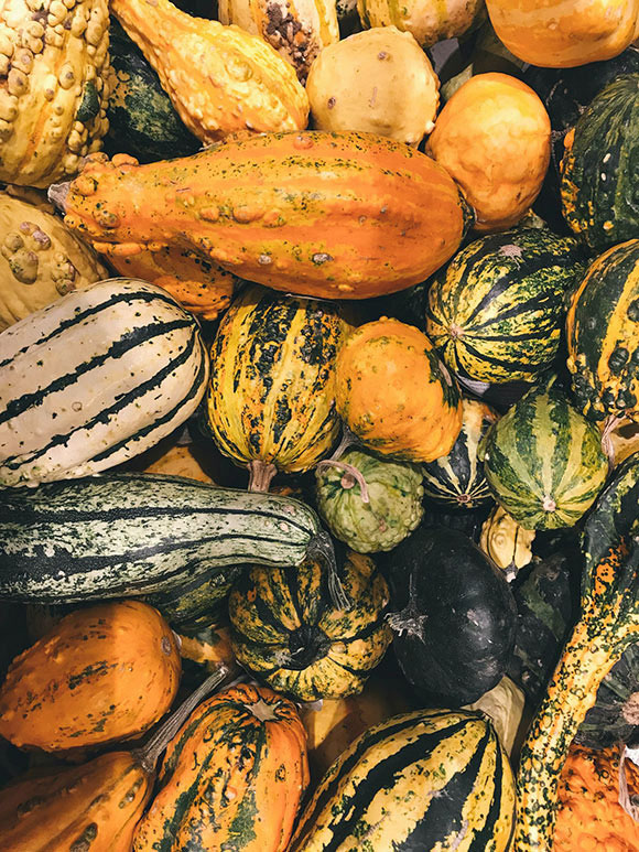 objectif complement courge